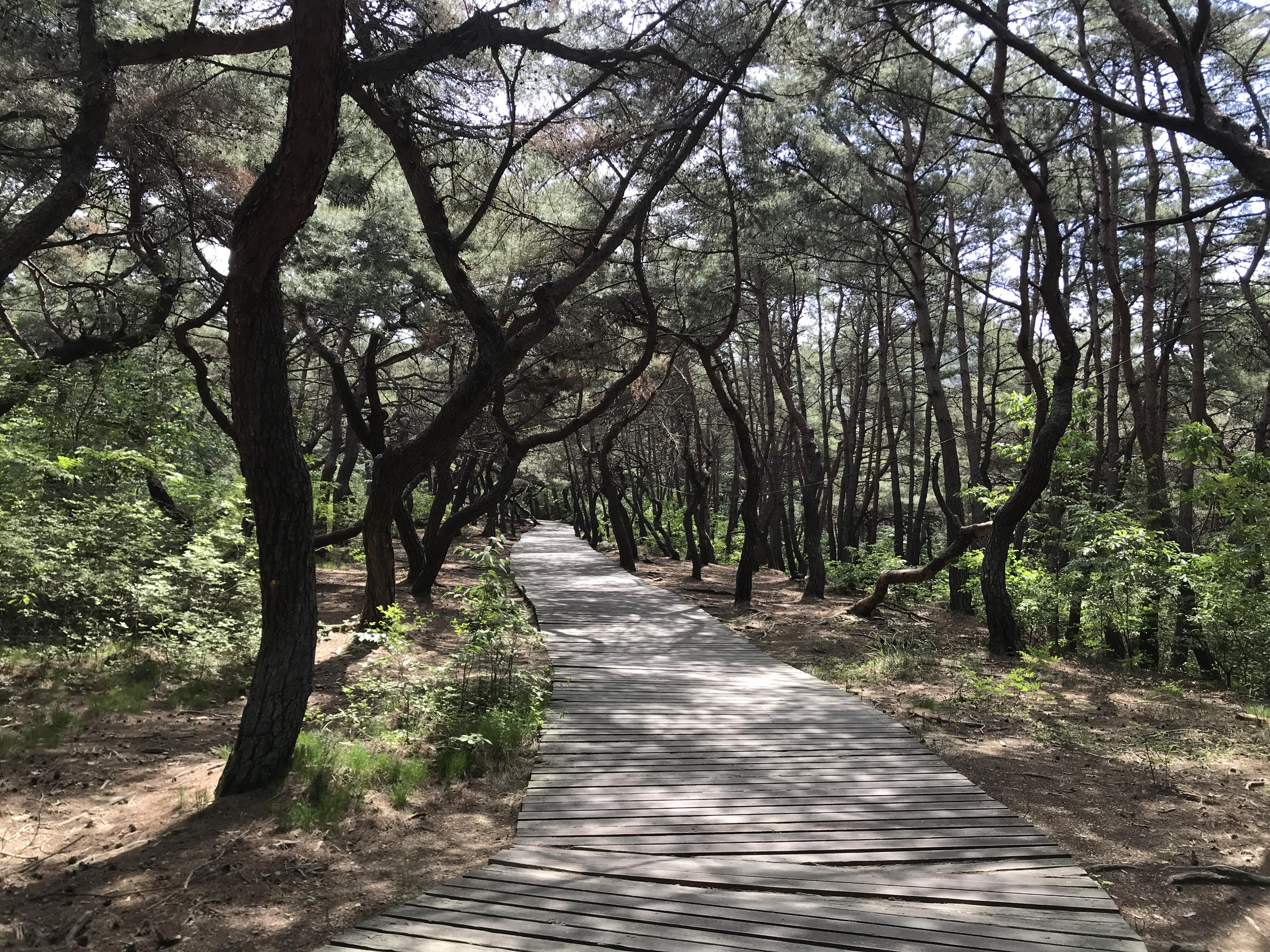 Gyeongju – Namsan Mount